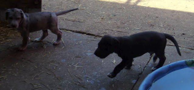 Serena & Jaspers 5-13-12 litter - SAM_3908.JPG