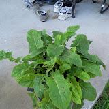 Gardening 2010, Part Three - 101_4496.JPG