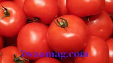 الطماطم في الكيتودايت