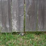 Gardening 2011 - 100_8950.JPG