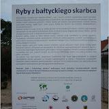 """Wystawa """"Ryby z bałtyckiego skarbca"""" w Helu"""