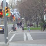 Paticena - març - 2011 - DSC01893.JPG