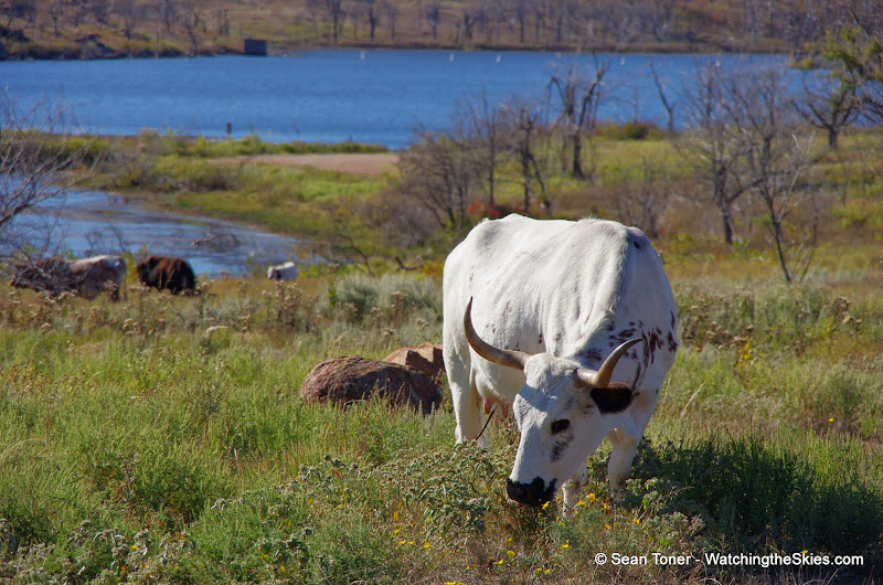 11-09-13 Wichita Mountains Wildlife Refuge - IMGP0410.JPG