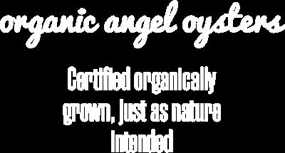 organic-angel-oysters-desktop