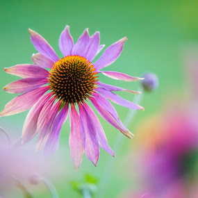 Love Me Tender by Sunny Zheng - Flowers Flower Gardens ( flora, floral, flower )