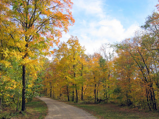 Fall color at the start of the Maplelag driveway.