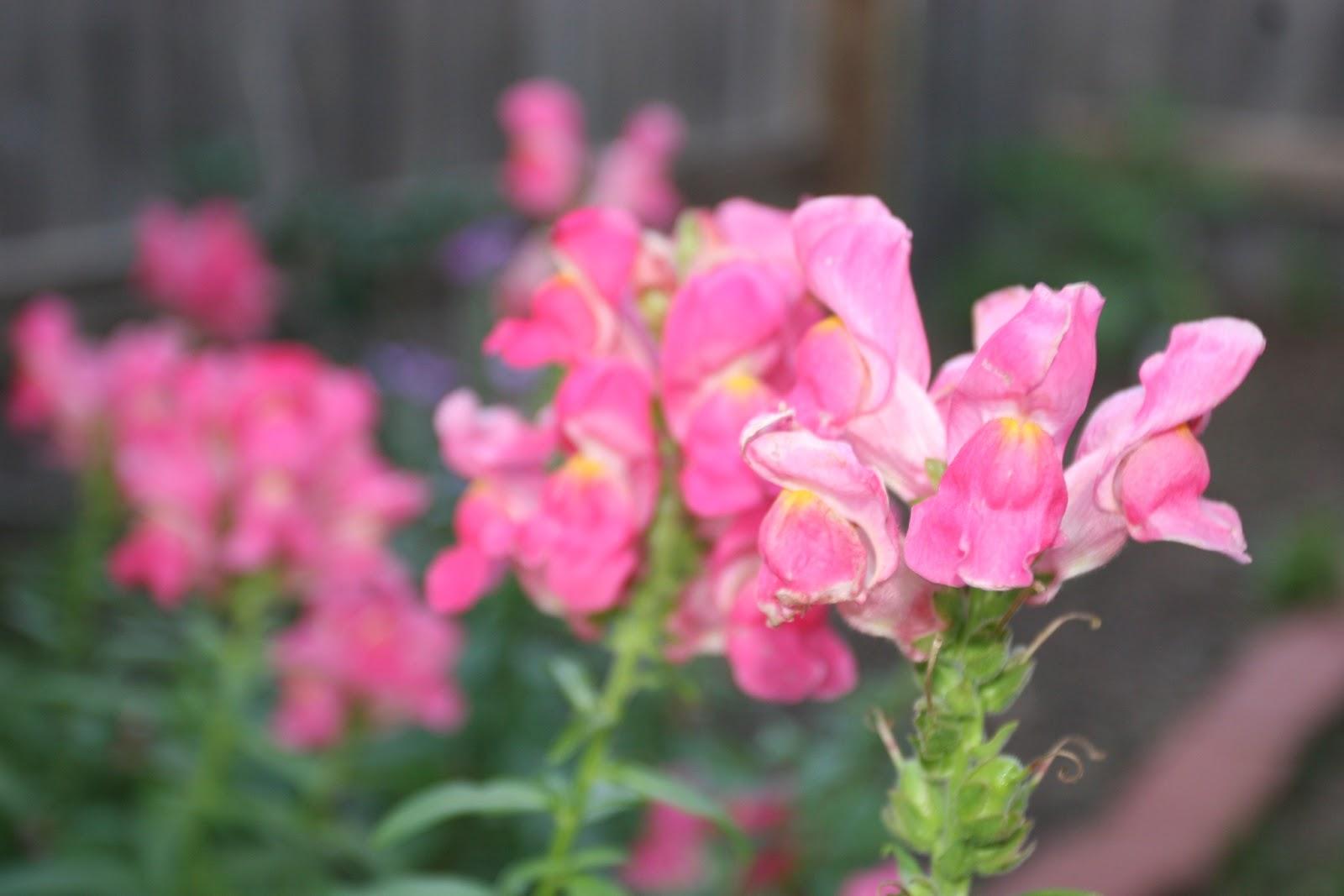 Gardening 2012 - IMG_2738.JPG