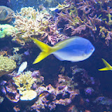 Downtown Aquarium - 116_3992.JPG