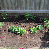 Gardening 2011 - 100_7671.JPG
