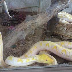 Snake Farm's profile photo