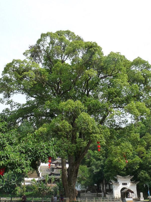 Chine .Yunnan,Menglian ,Tenchong, He shun, Chongning B - Picture%2B772.jpg