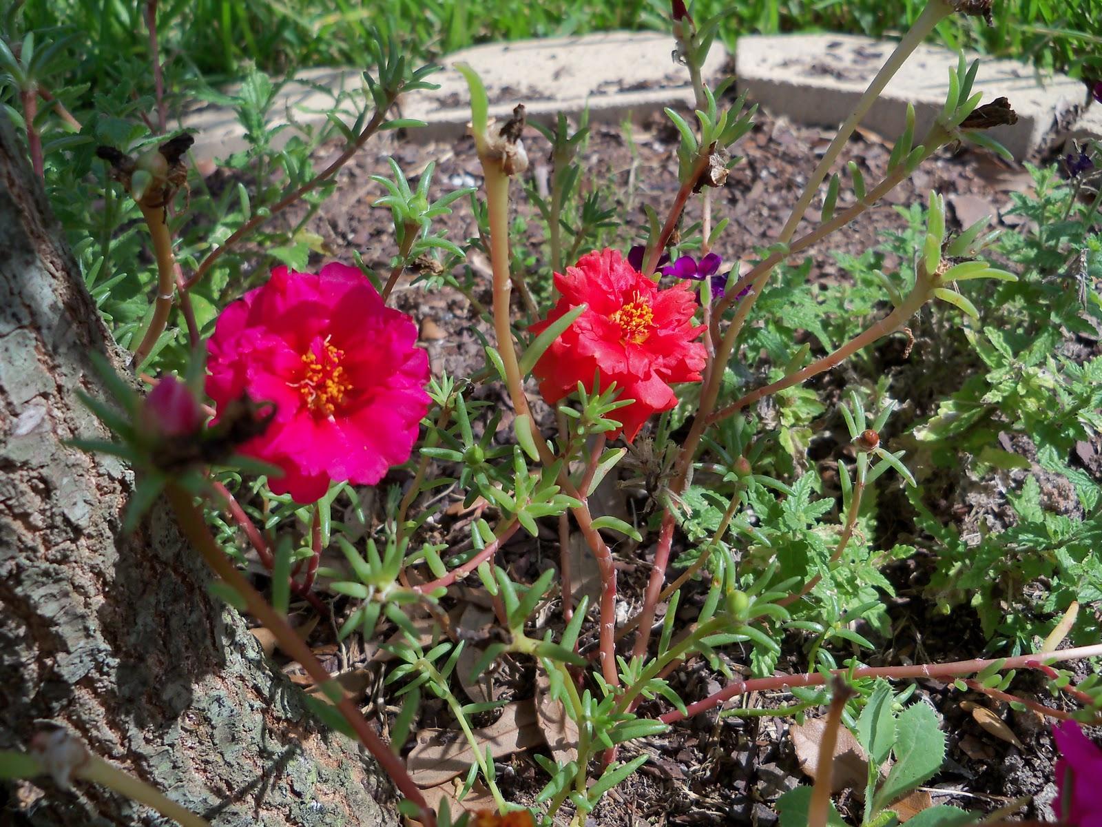 Gardening 2010, Part Three - 101_5052.JPG