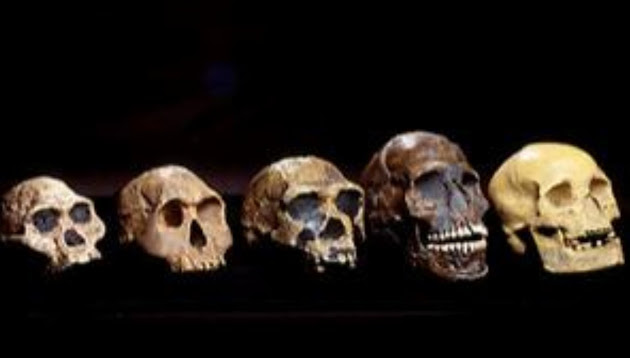 a discussion on the hypothesis of apes being the ancestors of the humans Early modern homo sapiens  this is consistent with the hypothesis that humans expanded  are we genetically different from our homo sapiens ancestors who.