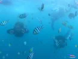 pulau pari 050516 GoPro 17