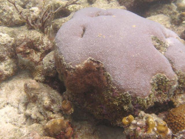 Bonaire 2011 - PICT0052.JPG
