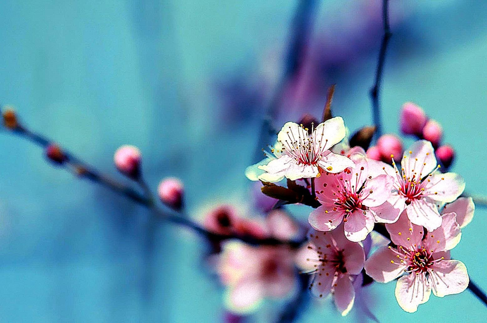 with flowers desktop -#main