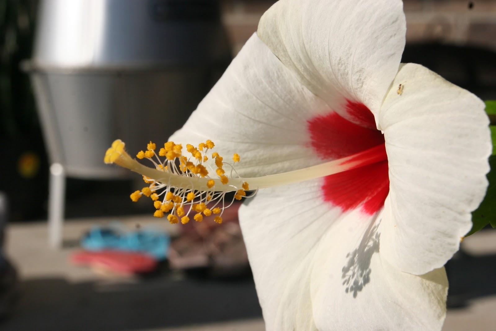 Gardening 2012 - IMG_3213.JPG