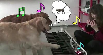 【動画】ピアノで「猫ふんじゃった」を弾く2匹の犬