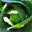 Urban Agroecology's profile photo