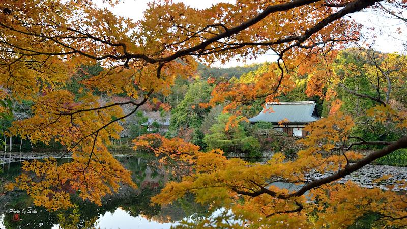 京都龍安寺