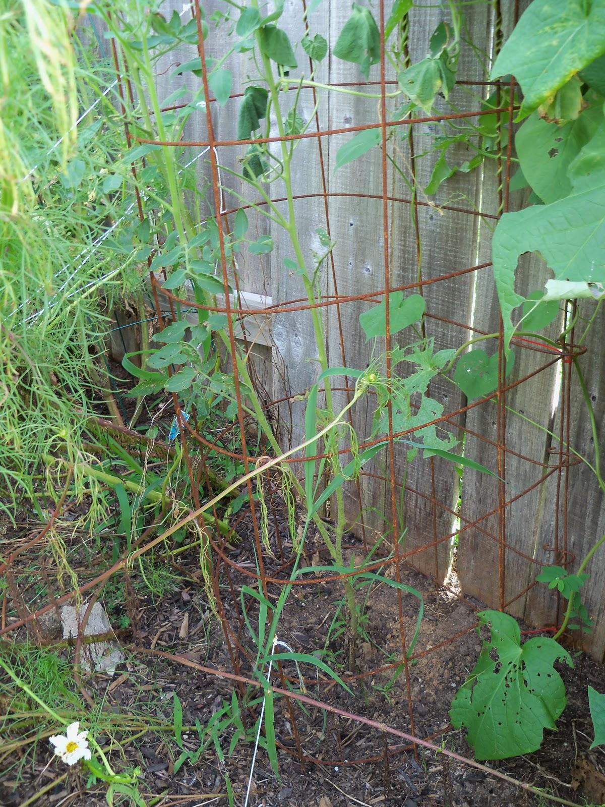 Gardening 2010, Part Three - 101_5199.JPG