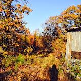 Anderson Creek Hunting Habitat - DeerHabitat003.JPG
