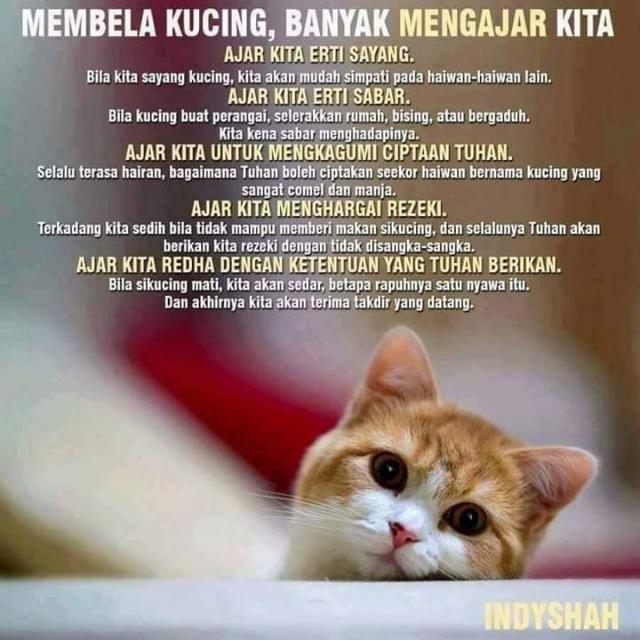 Apa Yang Kita Boleh Belajar Kalau Kita Bela Kucing?