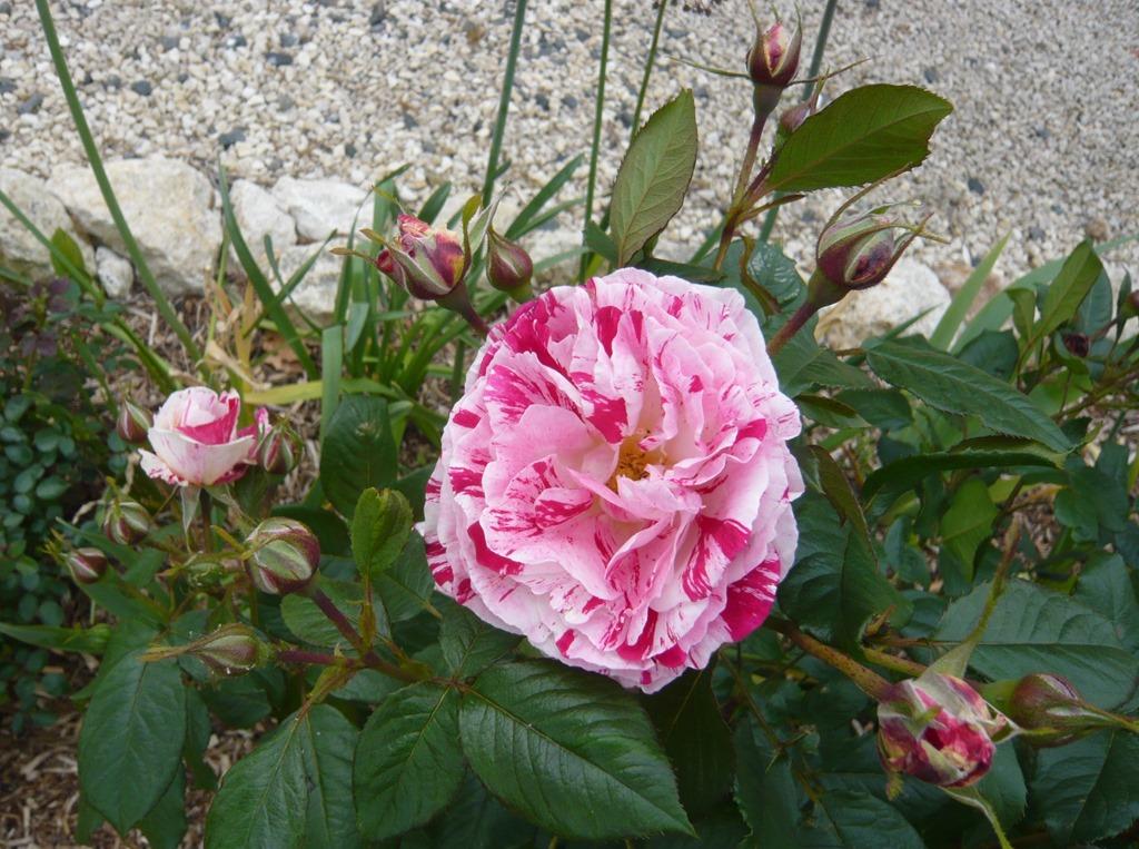 [Spring+flowers9c%5B3%5D]
