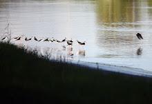 Un grupo de ciudadanos hace un recorrido para identificar aves en el área de la Hacienda La Esperanza.