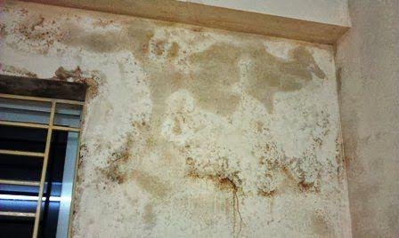Sơn hiệu ứng Waldo-Xử lý tường bị ẩm, mốc, mối