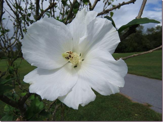 flowerIMG_9124