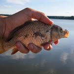 20150617_Fishing_Oleksandriya_012.jpg