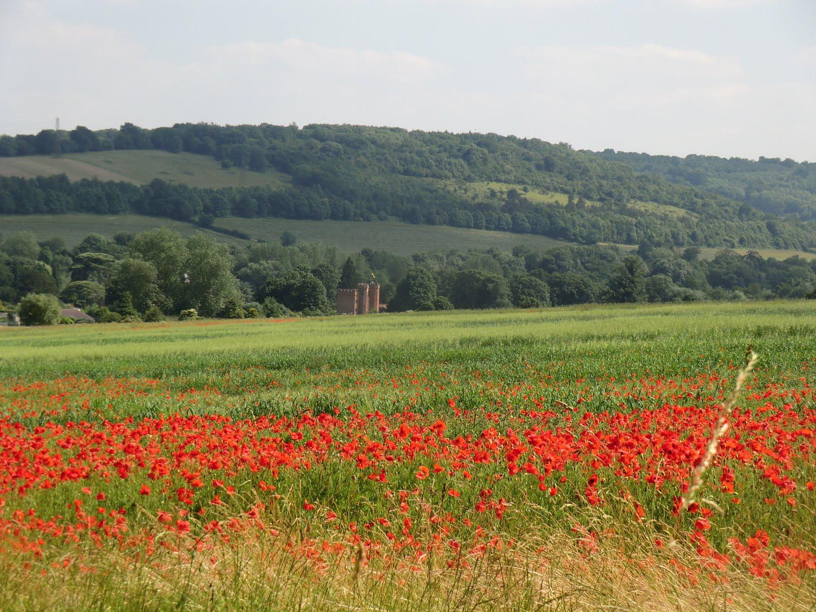 CIMG7514 Poppy field above Lullingstone Castle
