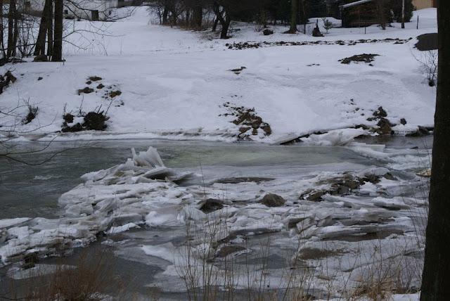 Zajęcia terenowe 29 lutego 2012 - DSC06174_1.JPG