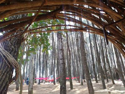 Pinus Pengger, Bantul