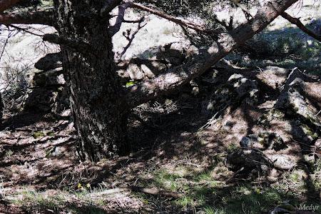 Refugio cerro pñonero