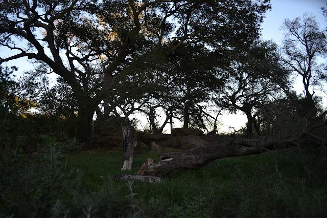 oak circle