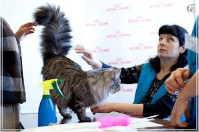 cats-show-25-03-2012-fife-spb-www.coonplanet.ru-041.jpg