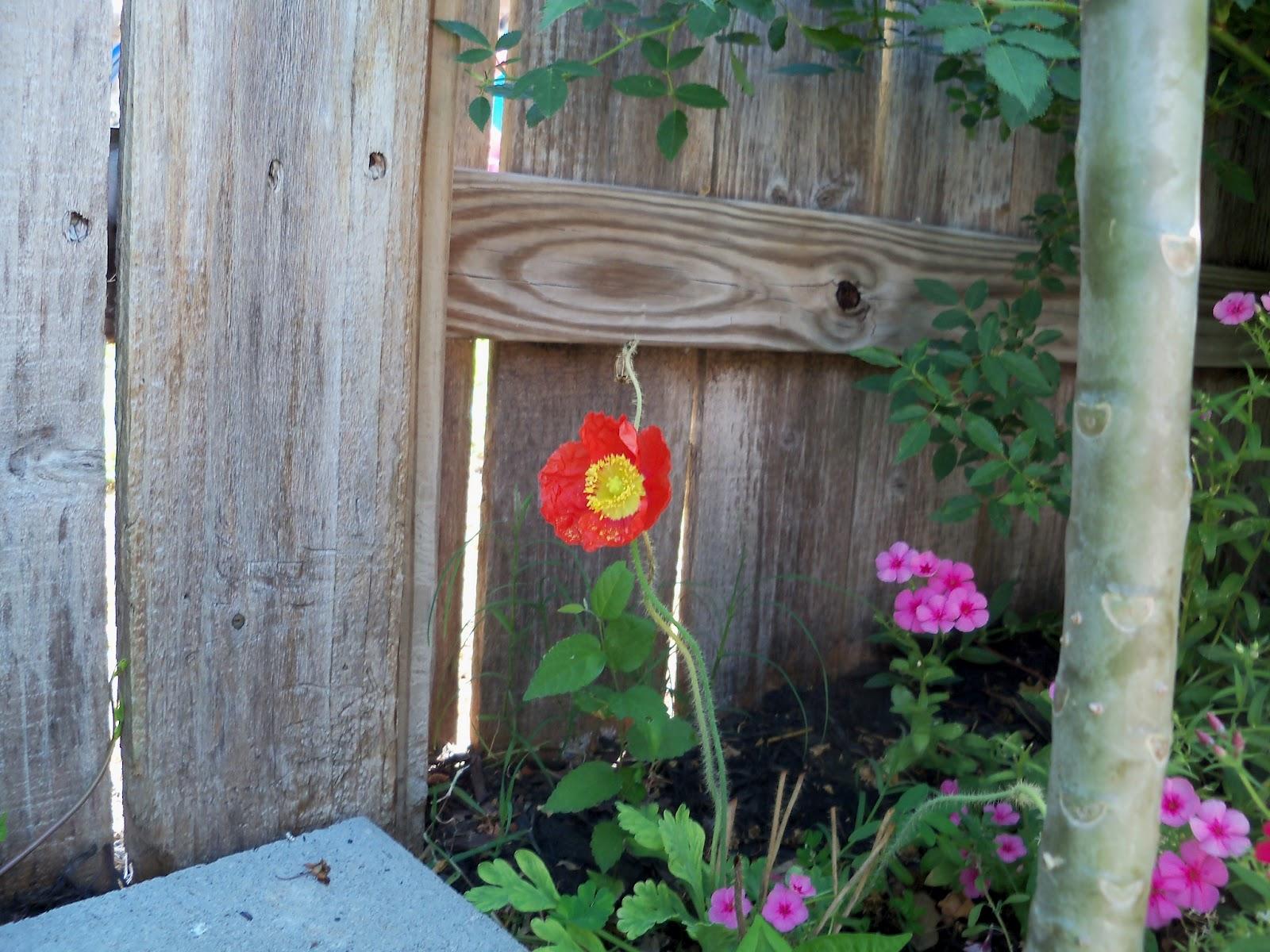 Gardening 2011 - 100_9093.JPG