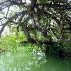 La zona de manglar del río Valle