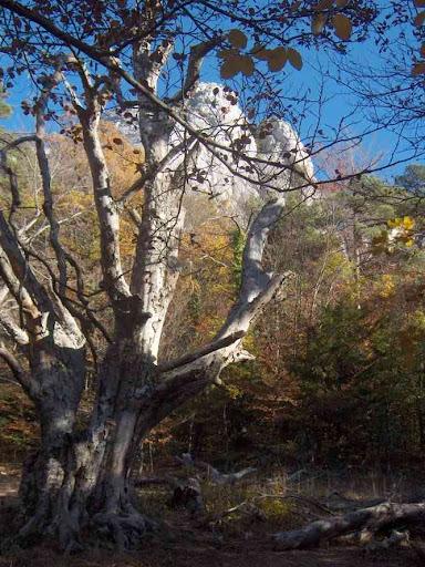 Halte près de cet arbre à la demande pressante de CM...