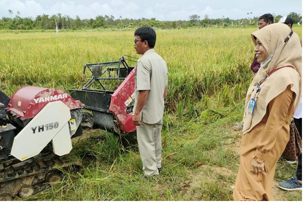 Hasil Ubinan Padi, Petani Desa Sei Lancang Panen Padi 5 Ton per Hektare