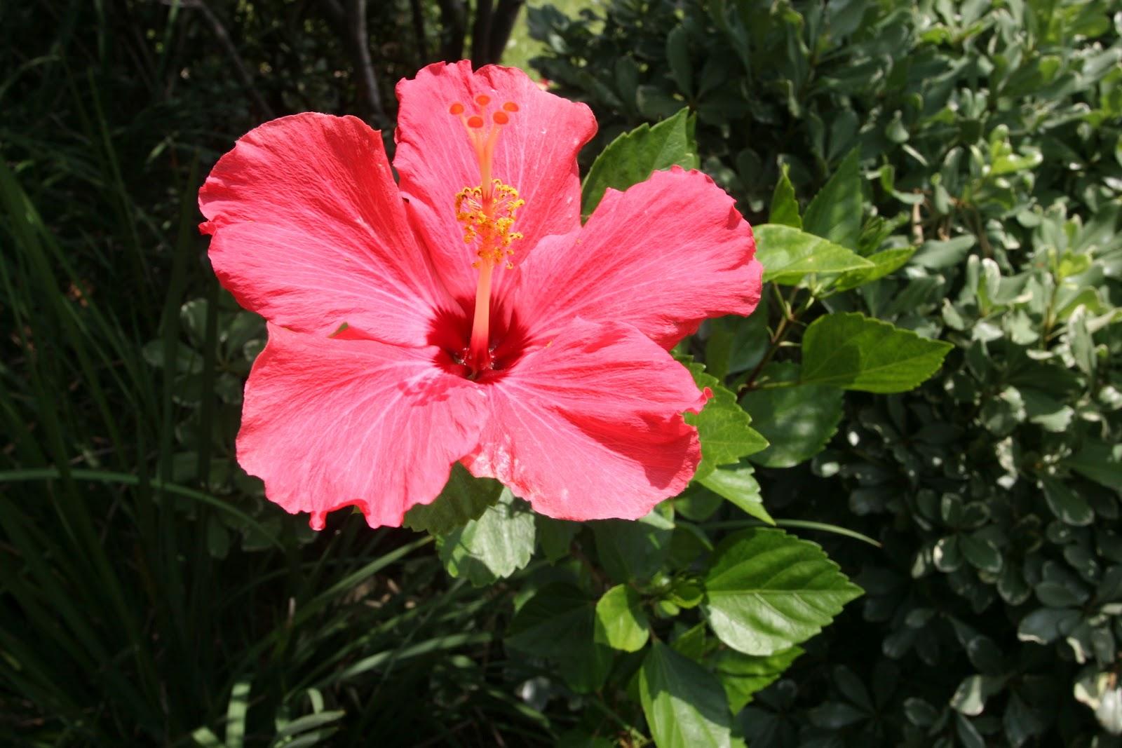 Gardening 2012 - IMG_3859.JPG