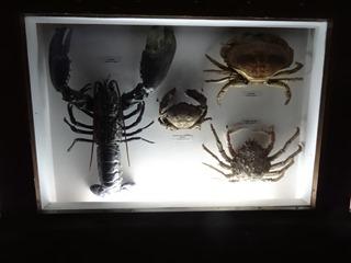 2016.03.14-022 crustacés
