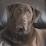 Rondol Greene's profile photo