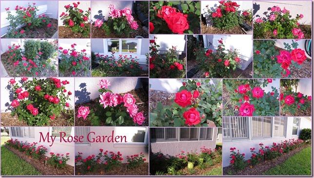 roses2[4]