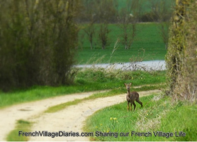 french village diaries silent sunday deer dog walks France