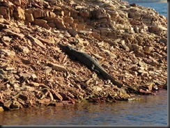 170601 062 Lake Argyle Cruise Fresh Water Crocodile