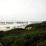_DSC9532.thumb.jpg