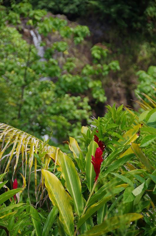 06-23-13 Big Island Waterfalls, Travel to Kauai - IMGP8922.JPG
